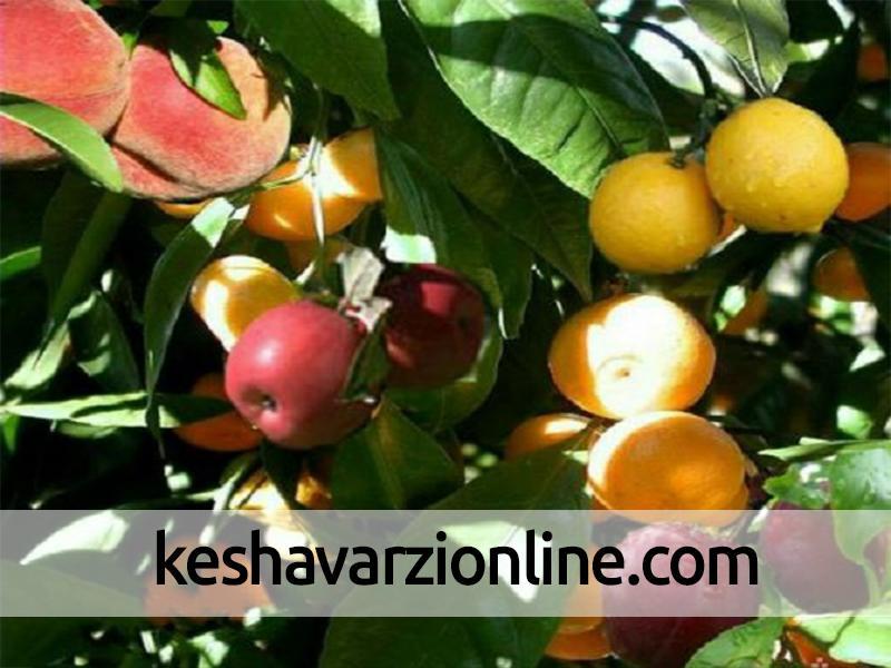 درختی با شش میوه مختلف