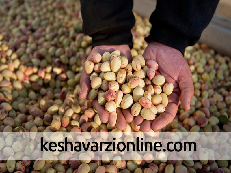 افتتاح معاملات پسته در بورس کالای ایران