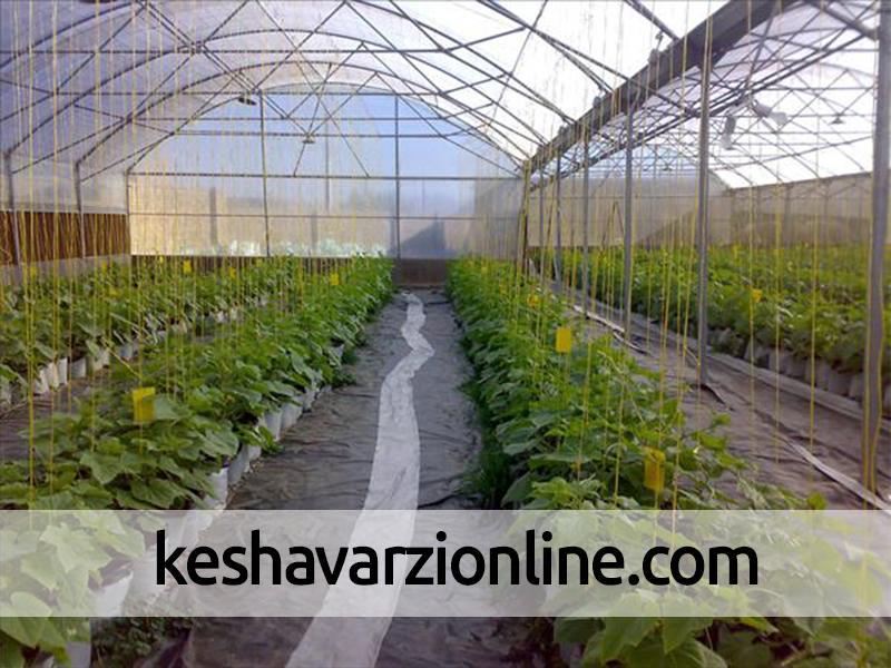 توسعه گلخانه تنها راه نجات کشور از بحران کمآبی