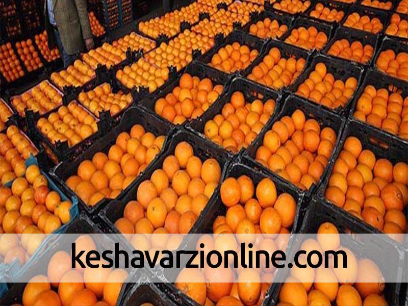 پای پرتقال مصری به بازار باز شد
