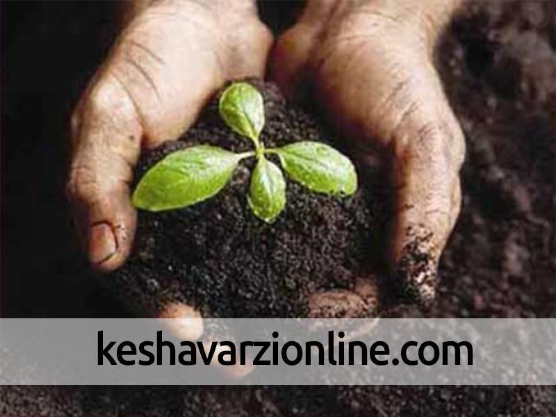 محتوای ارگانیک کربن بیش از60 درصد خاک های کشور کمتر از یک درصد است