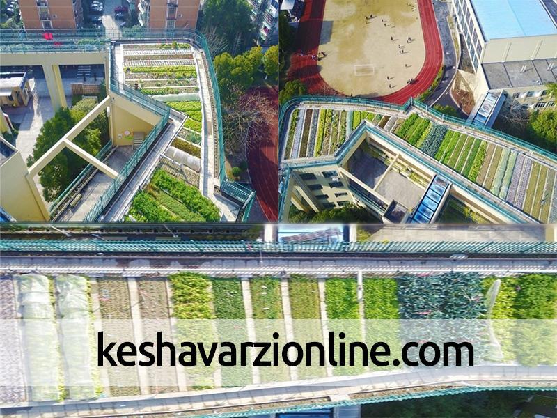 پرورش محصولات کشاورزی روی سقف یک مدرسه در چین