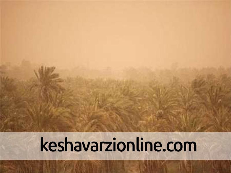 تاثیر منفی ریزگردها بر تولید محصولات کشاورزی