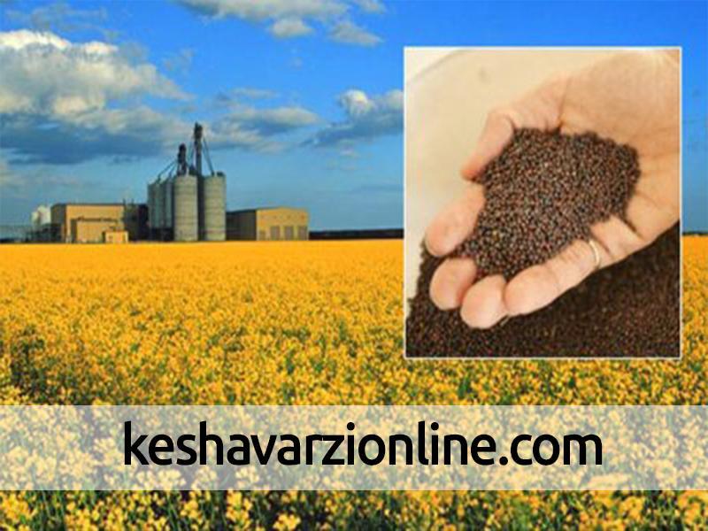 توسعه کشت دانه های روغنی در داخل اشتغال آفرین است