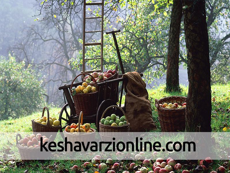 زمان مناسب سمپاشی درختان هلو ، سیب ،گوجه سبز ،گلابی