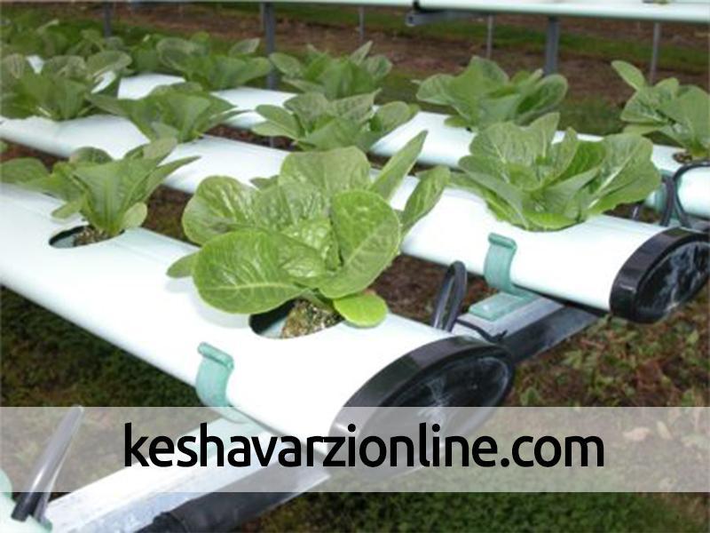 آشنایی با کشاورزی به روش هیدروپونیک