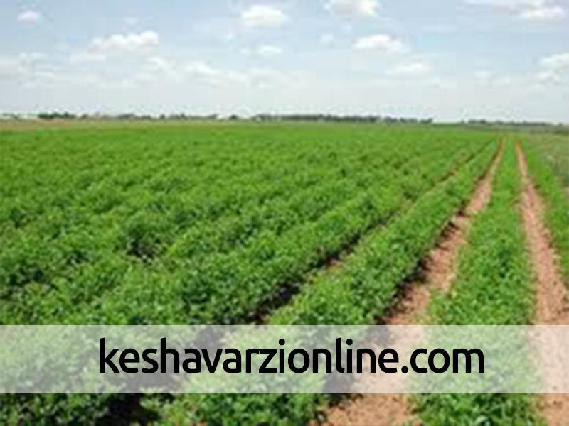 نهادههای کشاورزی تا تولید محصول نهایی رصد میشوند