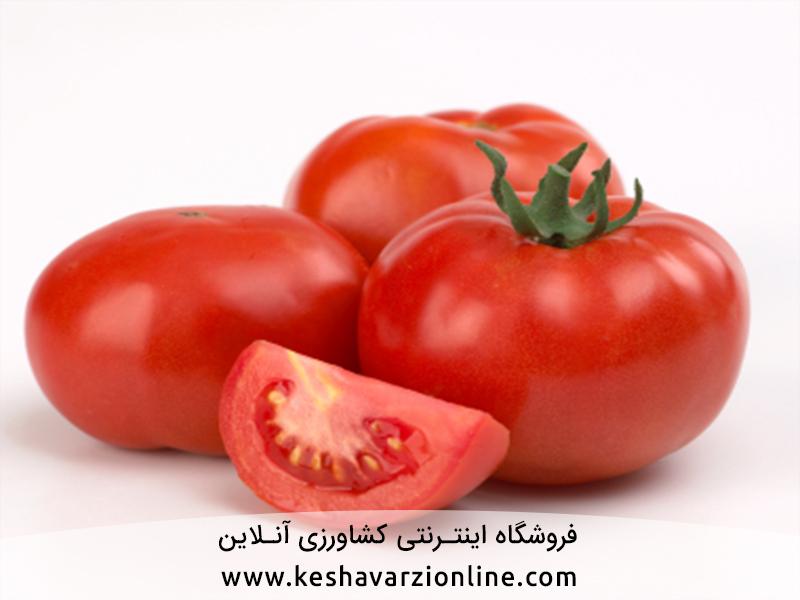 چگونه برداشت گوجه فرنگی را دو برابر کنیم