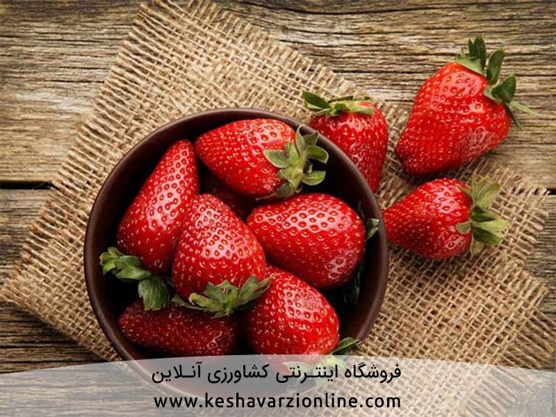 روش کاشت توت فرنگی