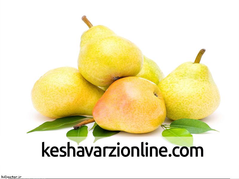 صدمات ناشی از دمای پایین سیب و گلابی
