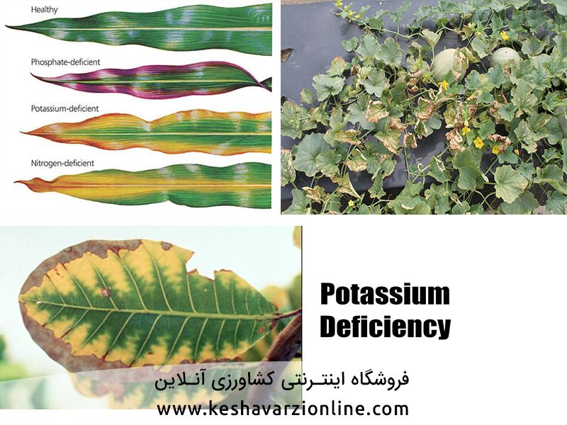 کاربردکودهای پتاسه و سولو پتاس در کشاورزی