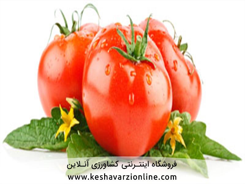 هفت عارضه مهم گوجه فرنگی
