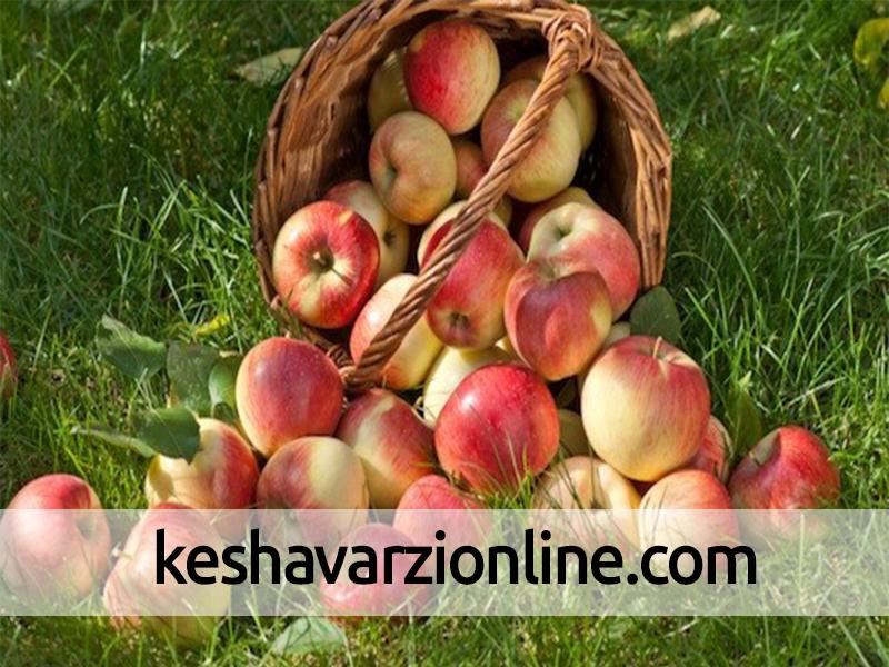 فساد حاصل از پیری سیب و گلابی