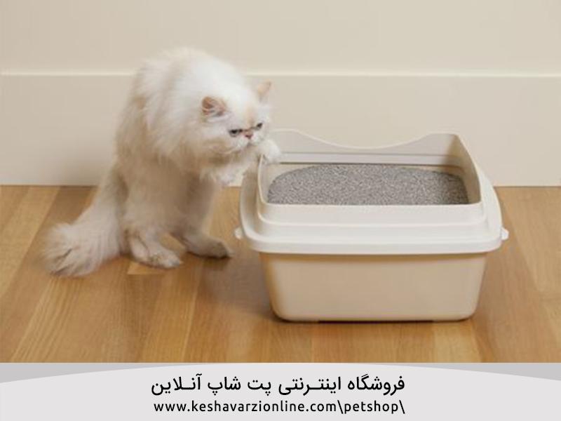 ظرف خاک گربه را کجا قرار دهیم؟