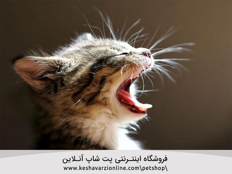 چرا گربه ها گاهی اوقات دیوانه وار رفتار می کنند؟