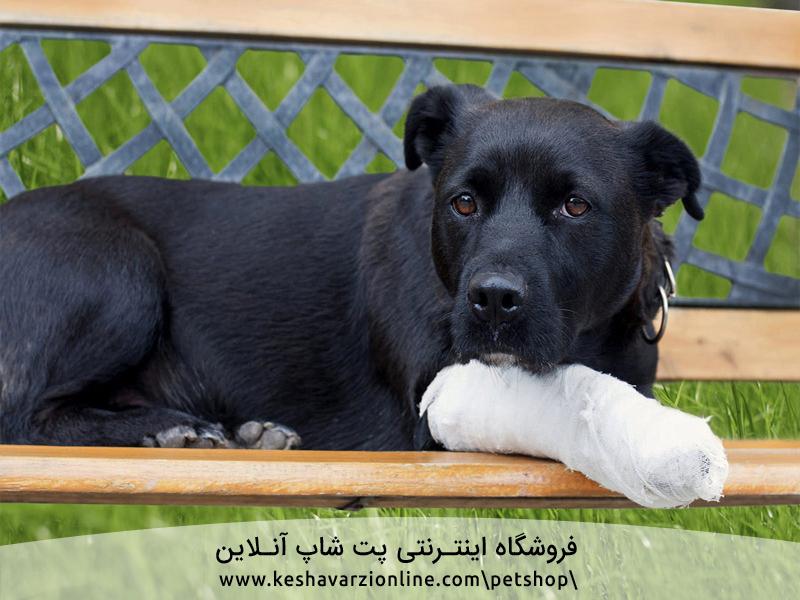 سگ ها و آسیب دیدگی