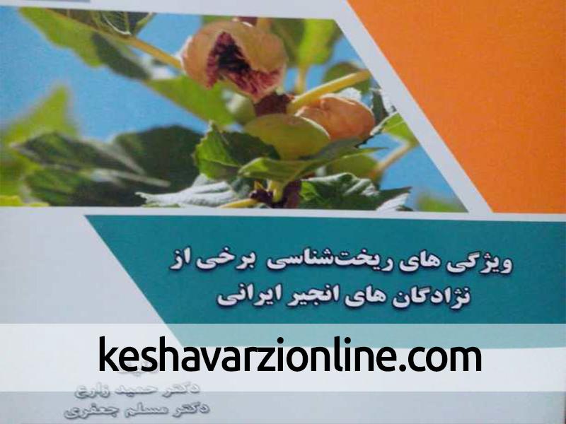 کتاب ویژگی ریخت شناسی انجیر ایرانی منتشر شد