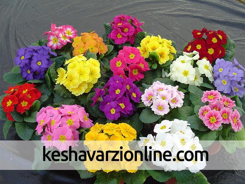 صادرات 10 هزار اصله گل و گياه زينتي از نوشهر به خارج کشور