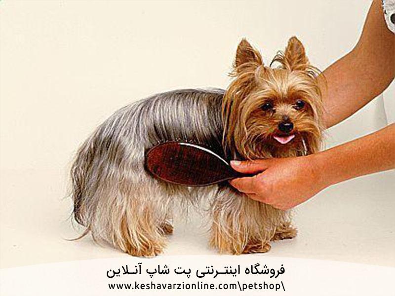 10 سگی که ریزش مو نداشته باشد کدام نژادها هستند