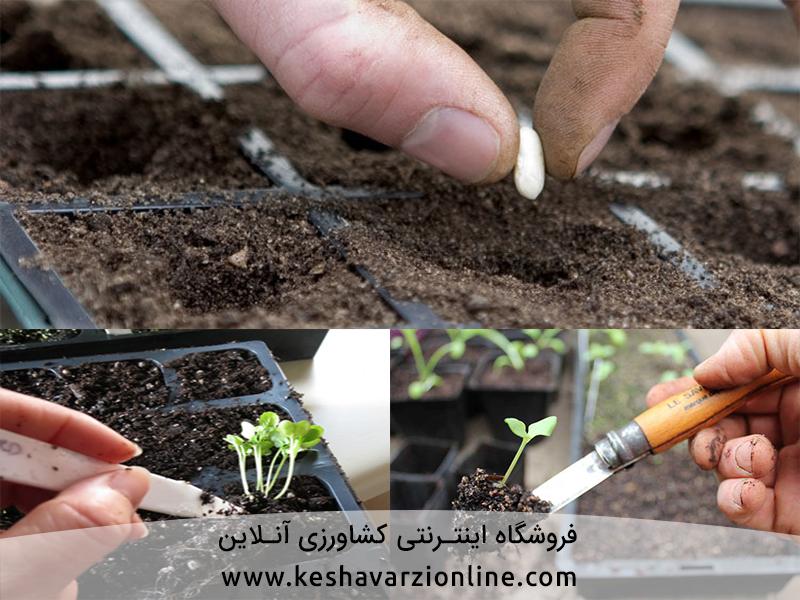 روش تولید نشا صیفی و سبزی