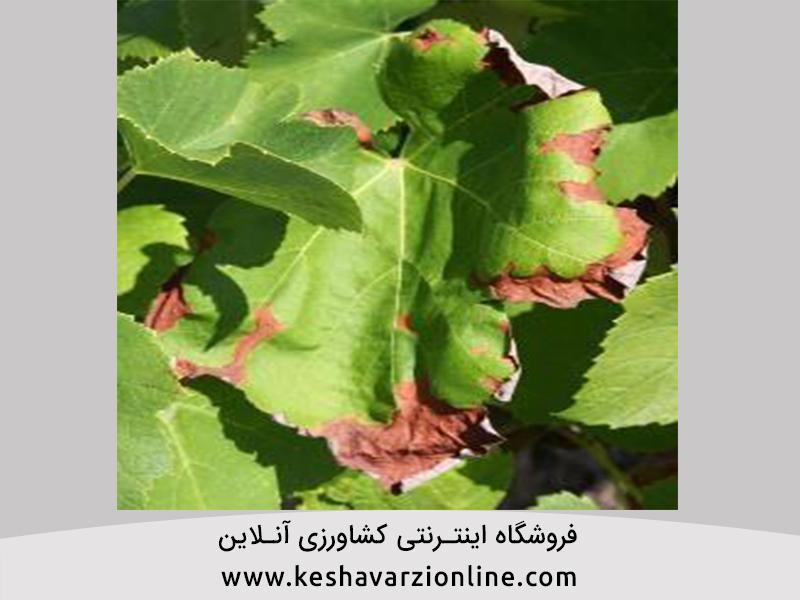 عوارض ناشی از کود و سموم شیمیایی بر روی گیاهان