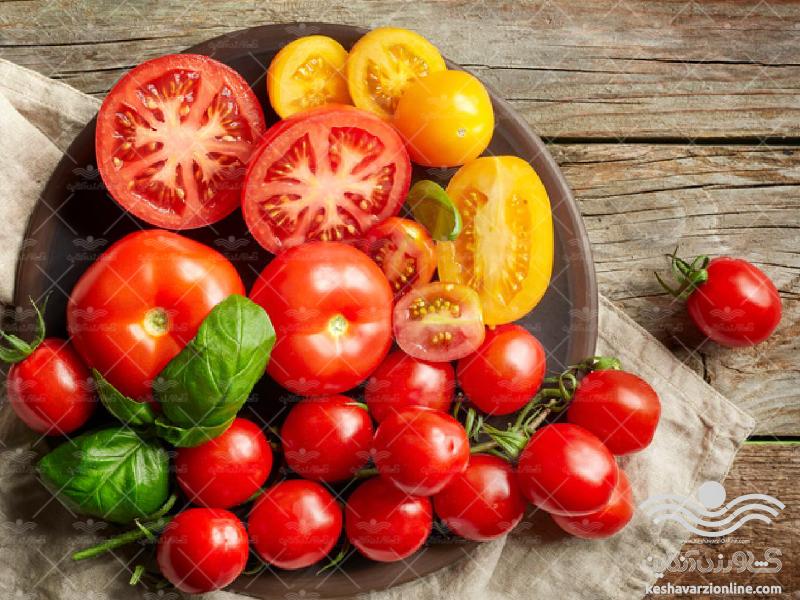 برنامه کامل تغذیه گوجه فرنگی