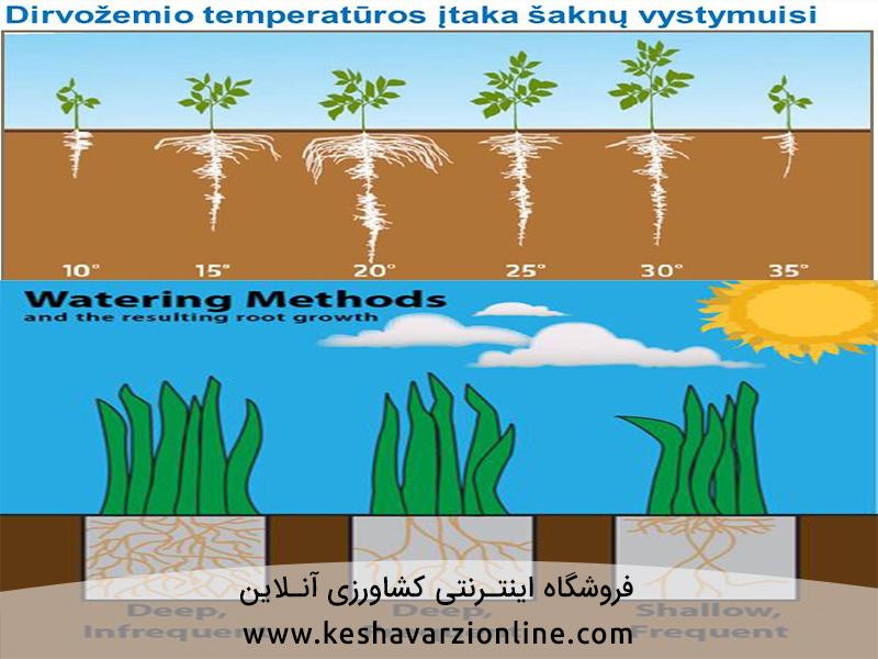 عوامل موثر بر رشد و پراکنش ریشه ها