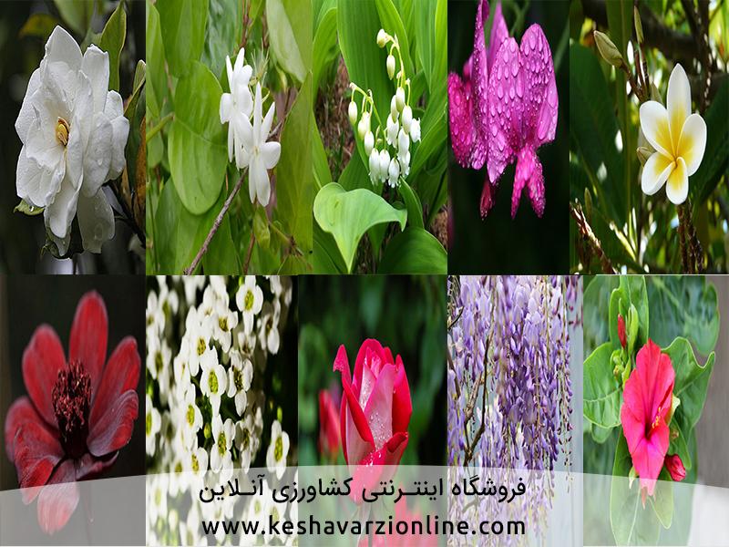 10 گل خوشبوی برتر دنیا