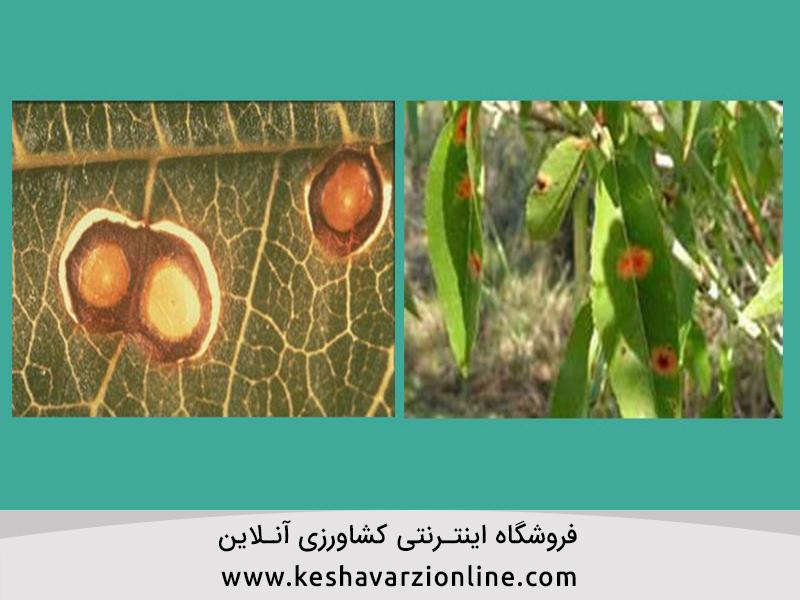 4 بیماری شایع بادام