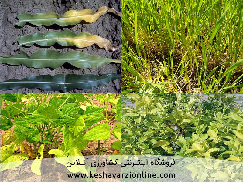 ازت در گیاهان چه نقشی دارند