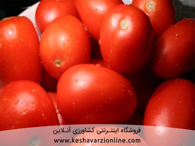 مهم ترین آفات و بیماری گوجه فرنگی گلخانه ای