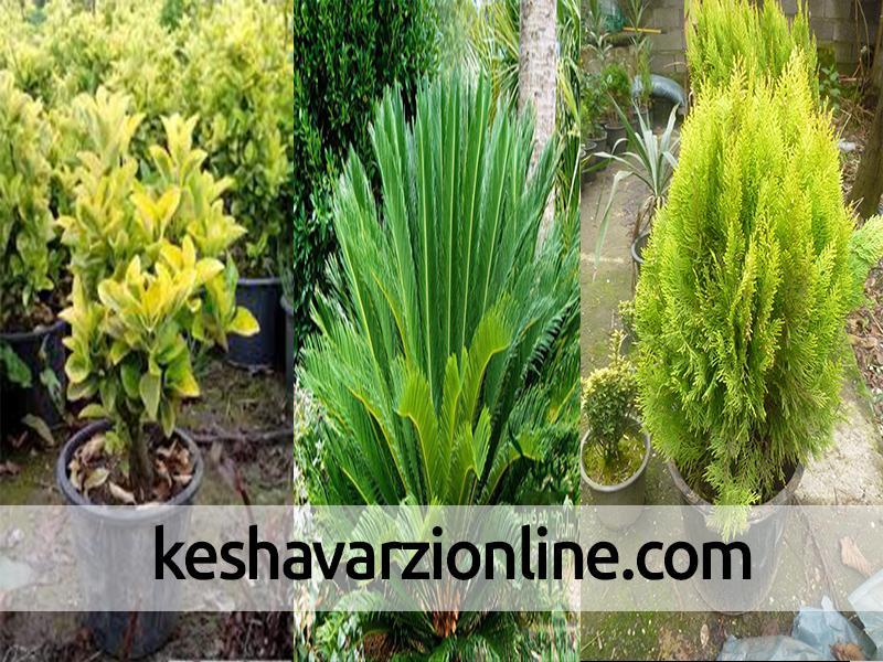 صادرات گل وگیاه زینتی غرب مازندران