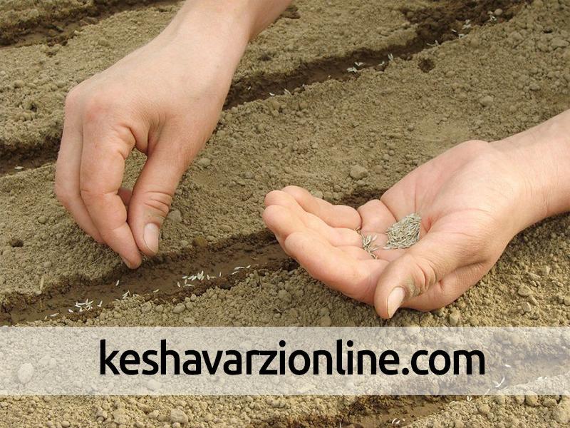 آماده کردن خاک جهت کاشت بذرها