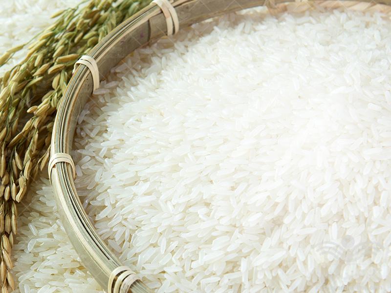 برنامه کامل تغذیه برنج