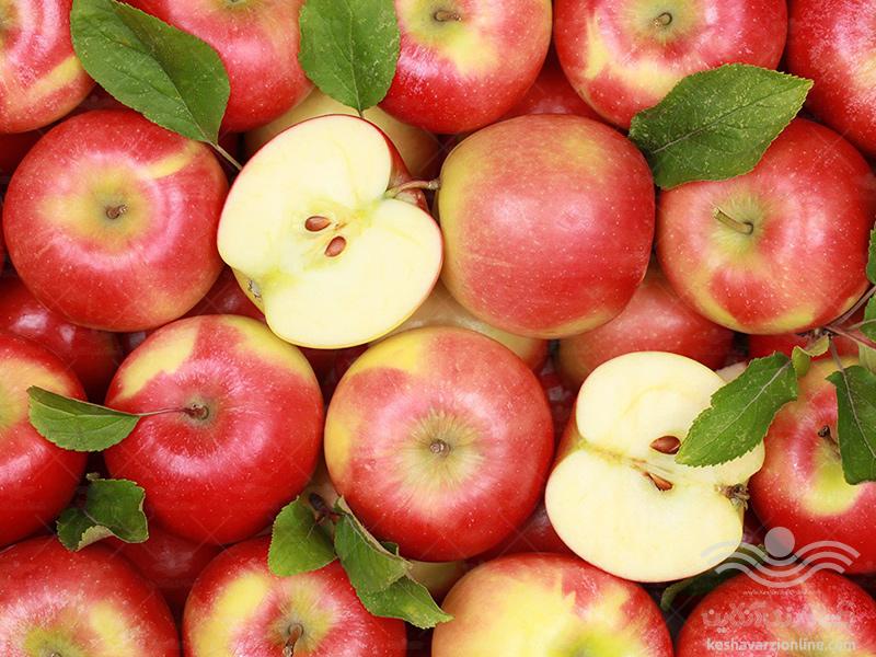 برنامه کامل تغذیه سیب درختی