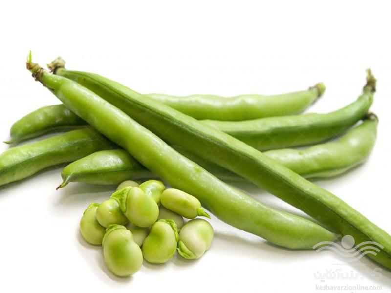 برنامه کامل تغذیه لوبیا سبز