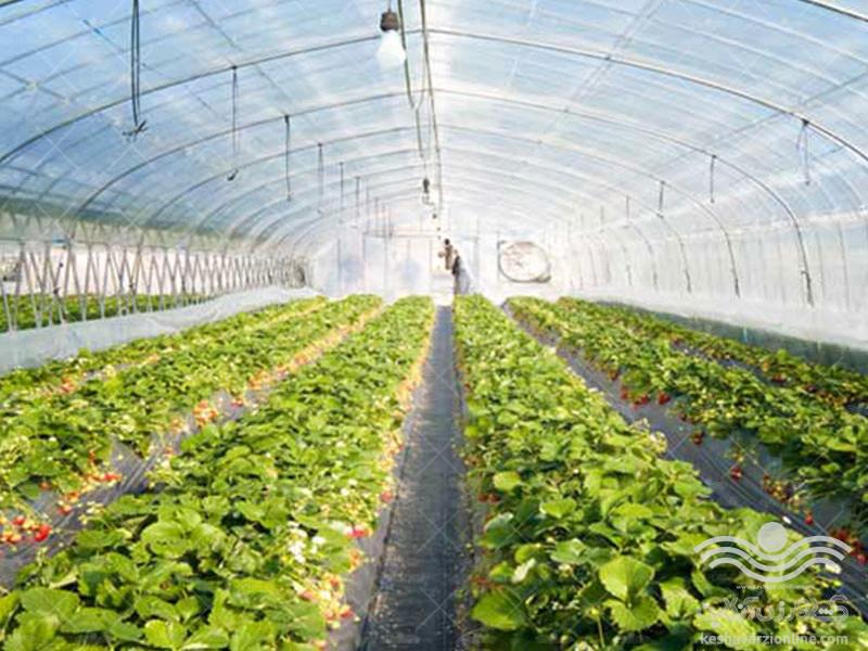 اصول آبیاری سیستمی در گلخانه