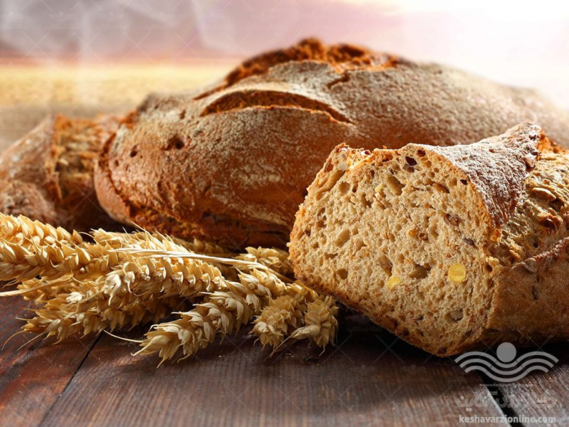 رقم جدید گندم نان