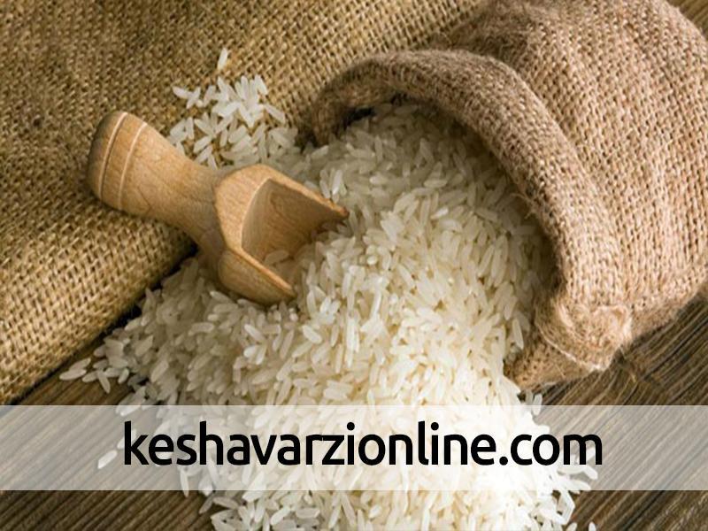 افزایش ۱۰ درصدی برنج ایرانی در سال جاری