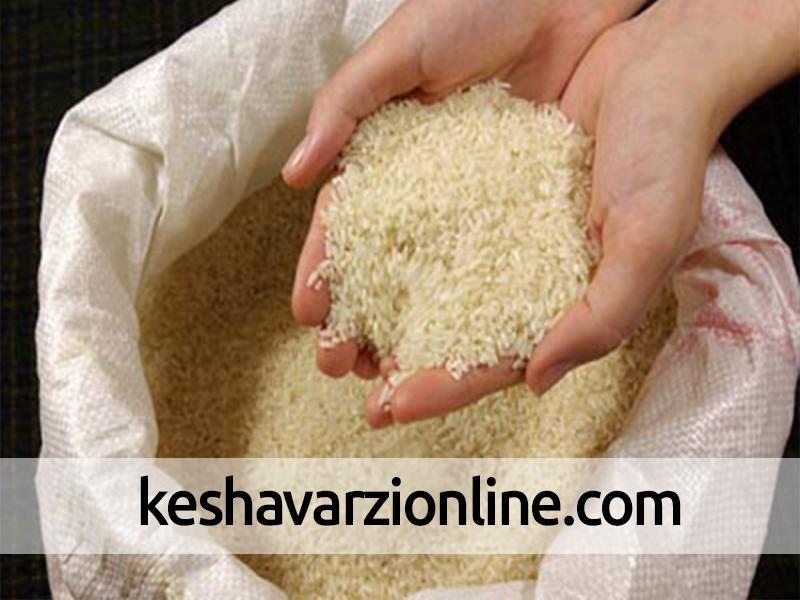احتمال افزایش تولید برنج سفید در گیلان