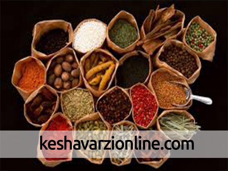 تولید سالانه 850 تن گیاهان دارویی در مازندران