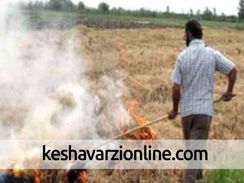 آتش زدن بقایای محصولات کشاورزی جنایت محیط زیستی