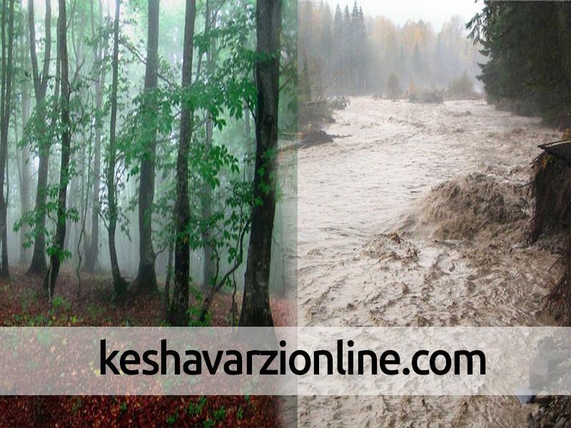 خسارت 260 میلیاردریالی بارندگی به کشاورزی پلدختر