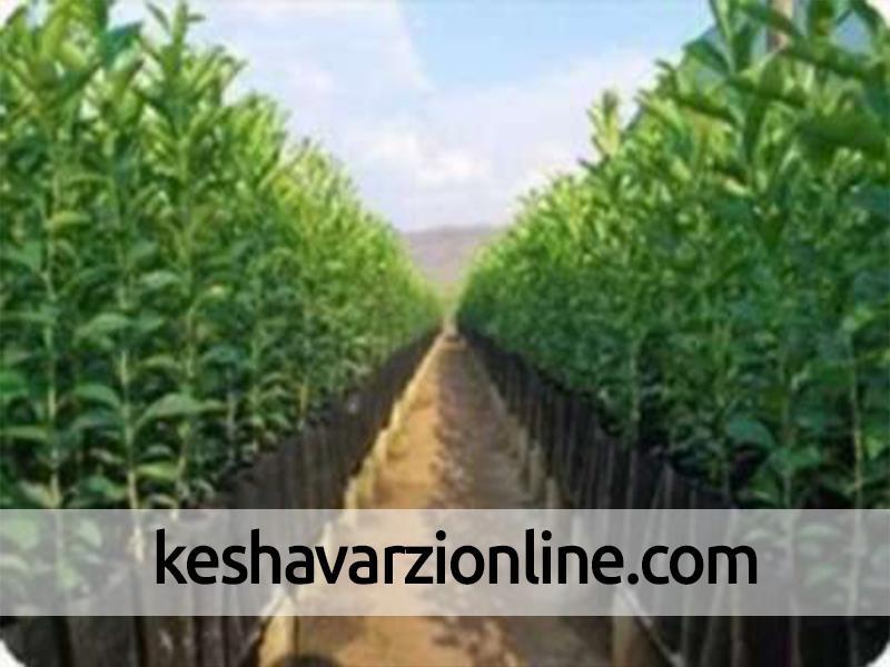 درخشش اصفهان در تولید نهالهای استاندارد در کشور