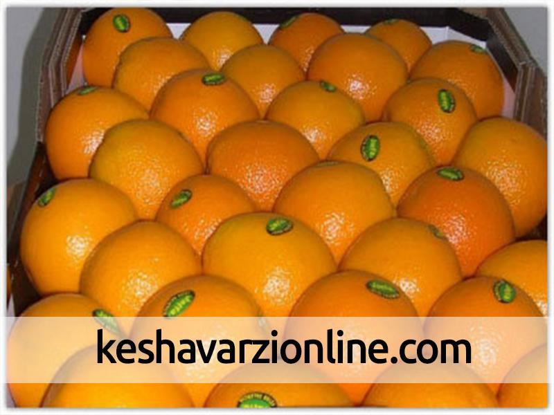 طلب باغداران گلستان بابت پرتقال سرمازده تحویلی در زمستان تسویه شد