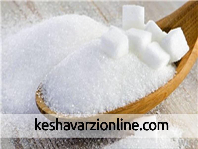 تولید شکر ۲ برابر میشود