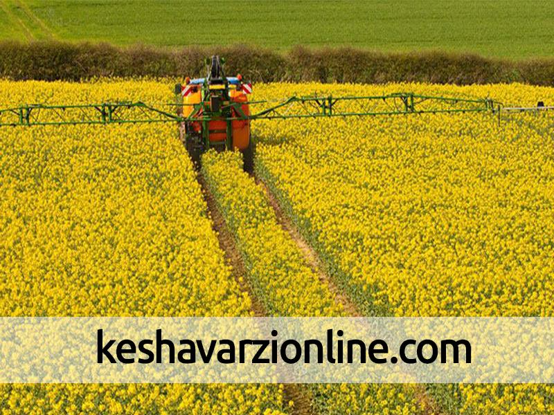 برداشت محصولات جو و کلزا در اراضی کشاورزی زرندیه آغاز شد