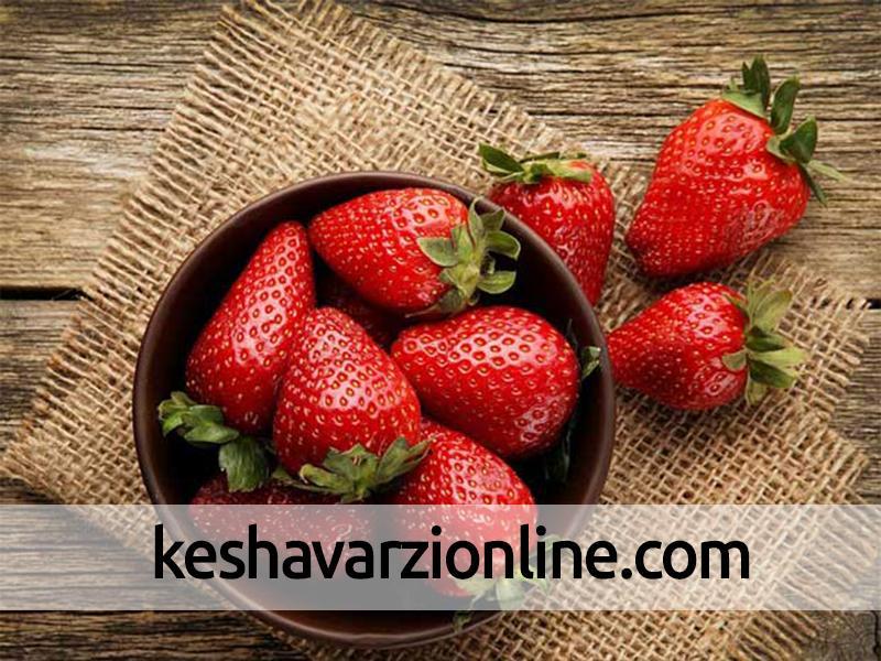 پیشبینی برداشت 210 تن توتفرنگی در آمل