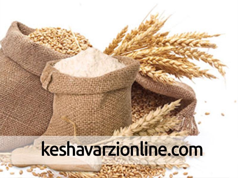 میزان افزایش قیمت خرید تضمینی برنج بیشتر از گندم و دانههای روغنی