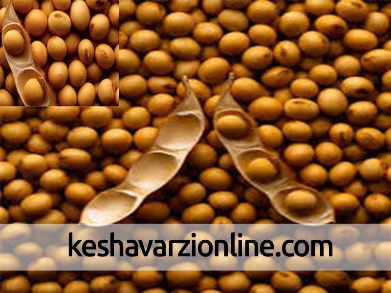همکاری فایو با ایران برای افزایش تولید دانههای روغنی و رسیدن به خودکفایی